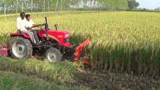 crop cutting by tractor  - Video
