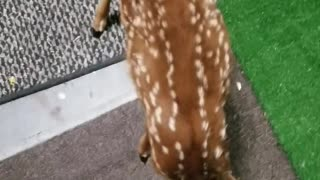 Man Rescues and Releases Wildlife