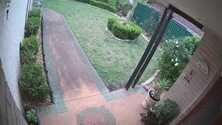 Delivery Person Plays Package Frisbee