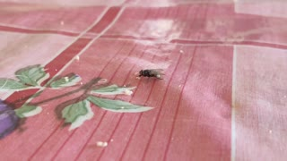 and again this fly