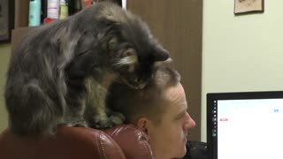 Maine coon Muffin become hair stylist  - Video