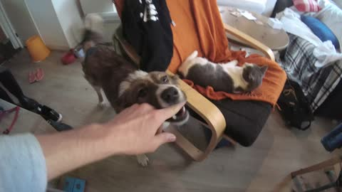 Guy Makes Addictive Song about his 2 dogs and cat