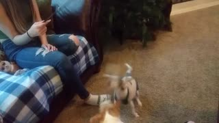 Anora plays with dogs