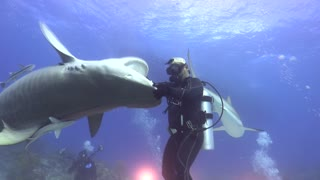 Dancing with a Tiger Shark - Video