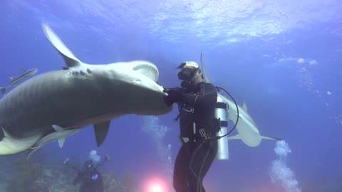 Dancing with a Tiger Shark