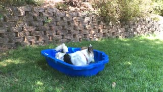 Bogart and Rascal's Pool Party