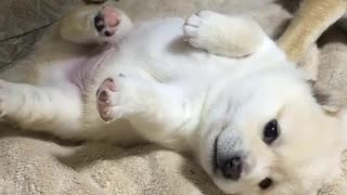 little puppy wants to play - Video