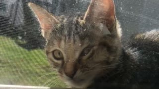 Cat stuck between screen and glass window