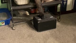 Ferrets Give Teamwork a Try