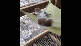 This squirrel is the funniest little character!