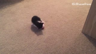 Black cat playing with mickey mouse toy