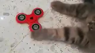 Kitten playing with a fidget spinner