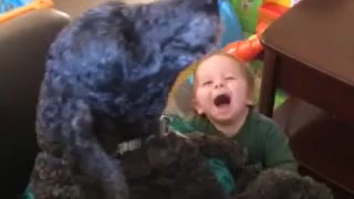 Dog and baby howl together