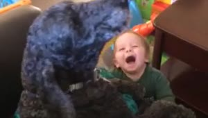Dog and baby howl together - Video
