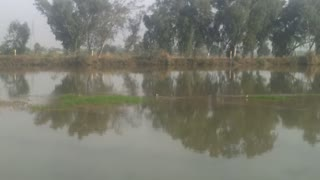 Birds catch fish in the canal and very beautiful view of village  - Video