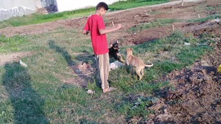 One dog playing with boy other got jealous  - Video