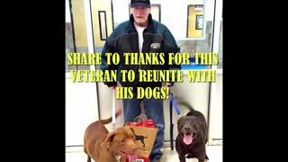 Veteran Reunite With His Dogs Will Make You Tears