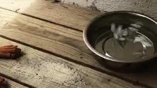 Brown dog does not want to drink water from bowl with ice in it