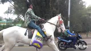 Must watch-Bangalore boy riding horse  - Video
