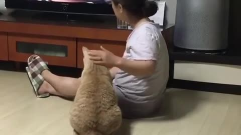Cat Watching the Knows With Her Owner