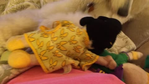 Poodle loves playing with favorite toy