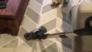 Cleaning the floor with my Doggie