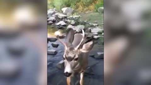 Friendly Hiker Finds A Deer With A Donut On His Antler