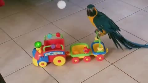 Dancing parrot goes on Christmas toy train ride