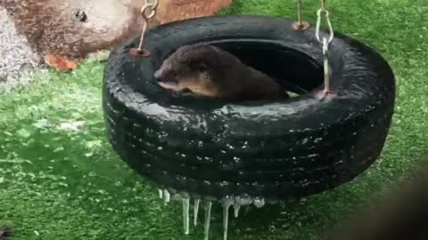 Orphaned otters in Texas totally bewildered by first ice experience