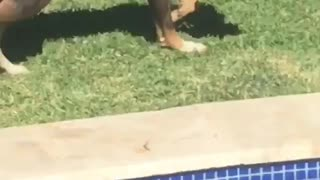 Dog Steals a Beer
