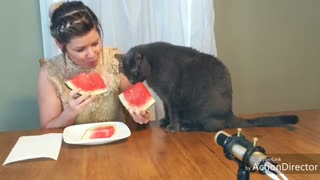 Cat Shares Juicy Watermelon Slice With Owner