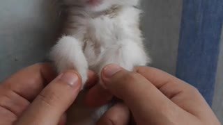 Kitten gets relaxing massage before bed