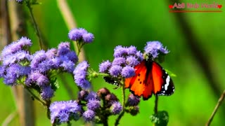 Close look of Beautiful butterfly on amazing flowers which are look beautiful