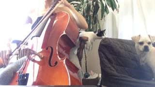 Woman plays cello while cat and dog fight on couch