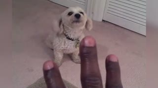 Pet Owner Teaches Dog How To Count Using Their Barks - Video