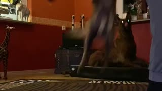 Dog shows incredible stunt