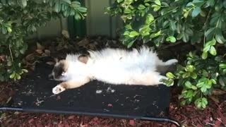 My cat sleeping outside home like a boss and birds sing around her - Video