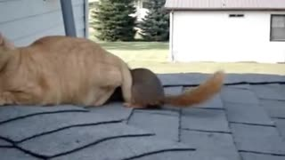 stroking the cat and squirrel - Video