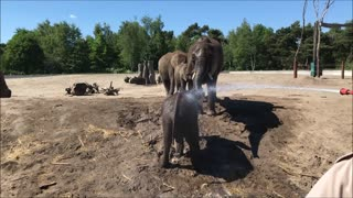 Elephant calf loves to be sprayed with garden hose - Video