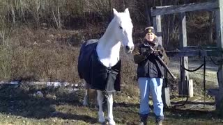 Practice Clicker Training With Your Horse And Be Safe From Zombies - Video