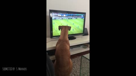Dog Loves Watching The Ball On TV