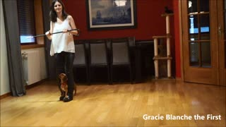 Albatroaz dog freestyle - Gracie - Video