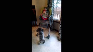 Adorable puppy really wants to play with baby - Video