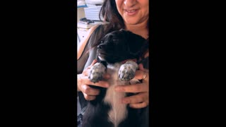 Cutest Puppy Love Ever - Video
