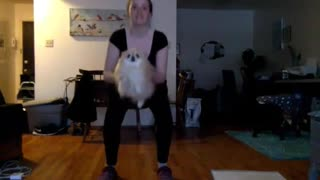 Pomeranian air-swims during owner's workout