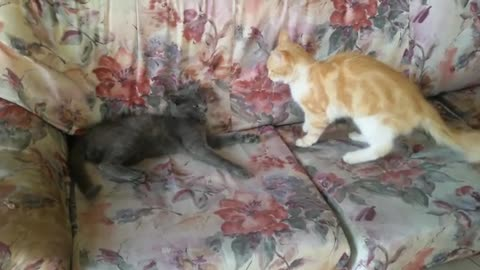 Cats rumbling or playing, I think it's about the territorial claim