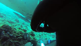Freediving with Manta Rays - Video