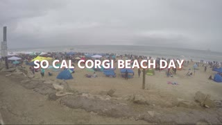 Corgi overload at Southern California Corgi Beach Day - Video
