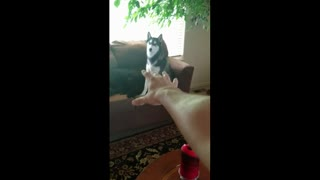When you have to leave your pets to go to work :( - Video
