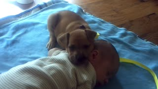 Adorable Puppy Falls Asleep On Baby while he Wasnt Awake